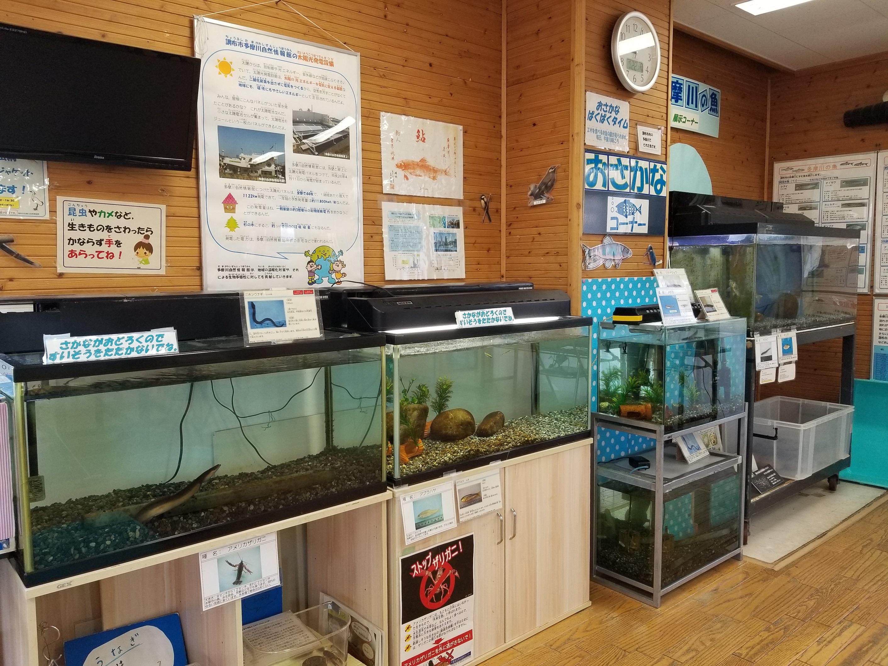 多摩川自然情報館内水槽